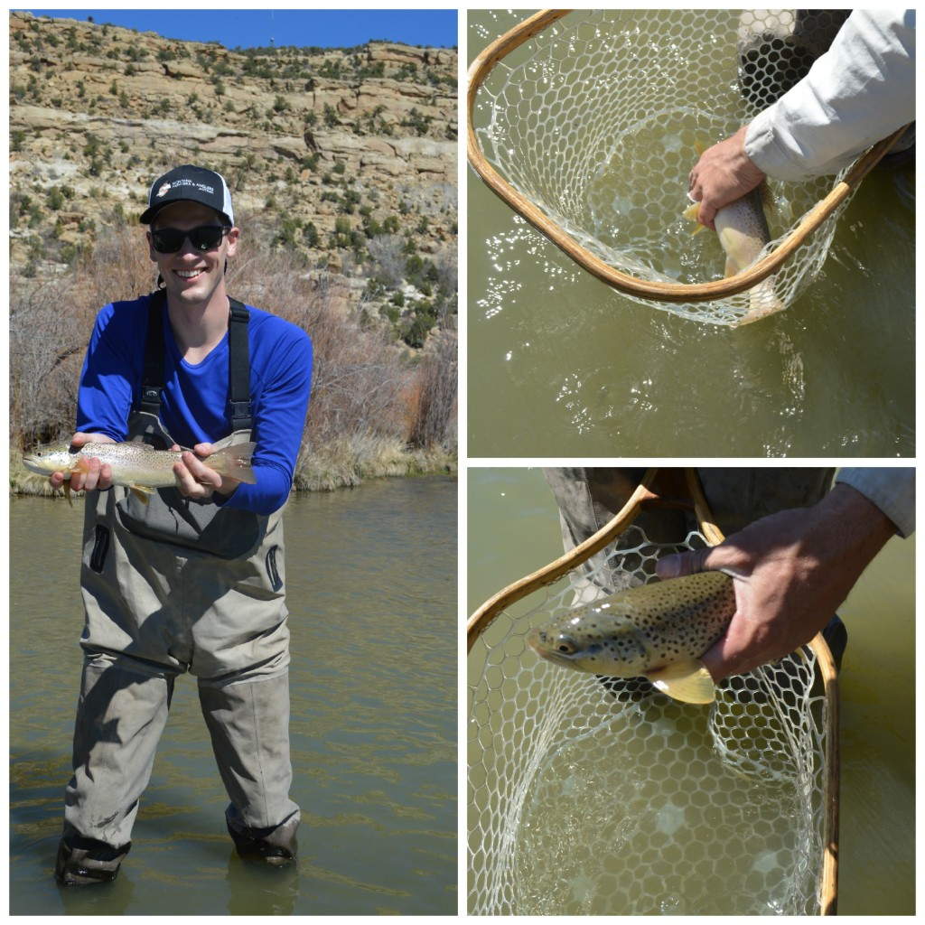 Dan fishing collage